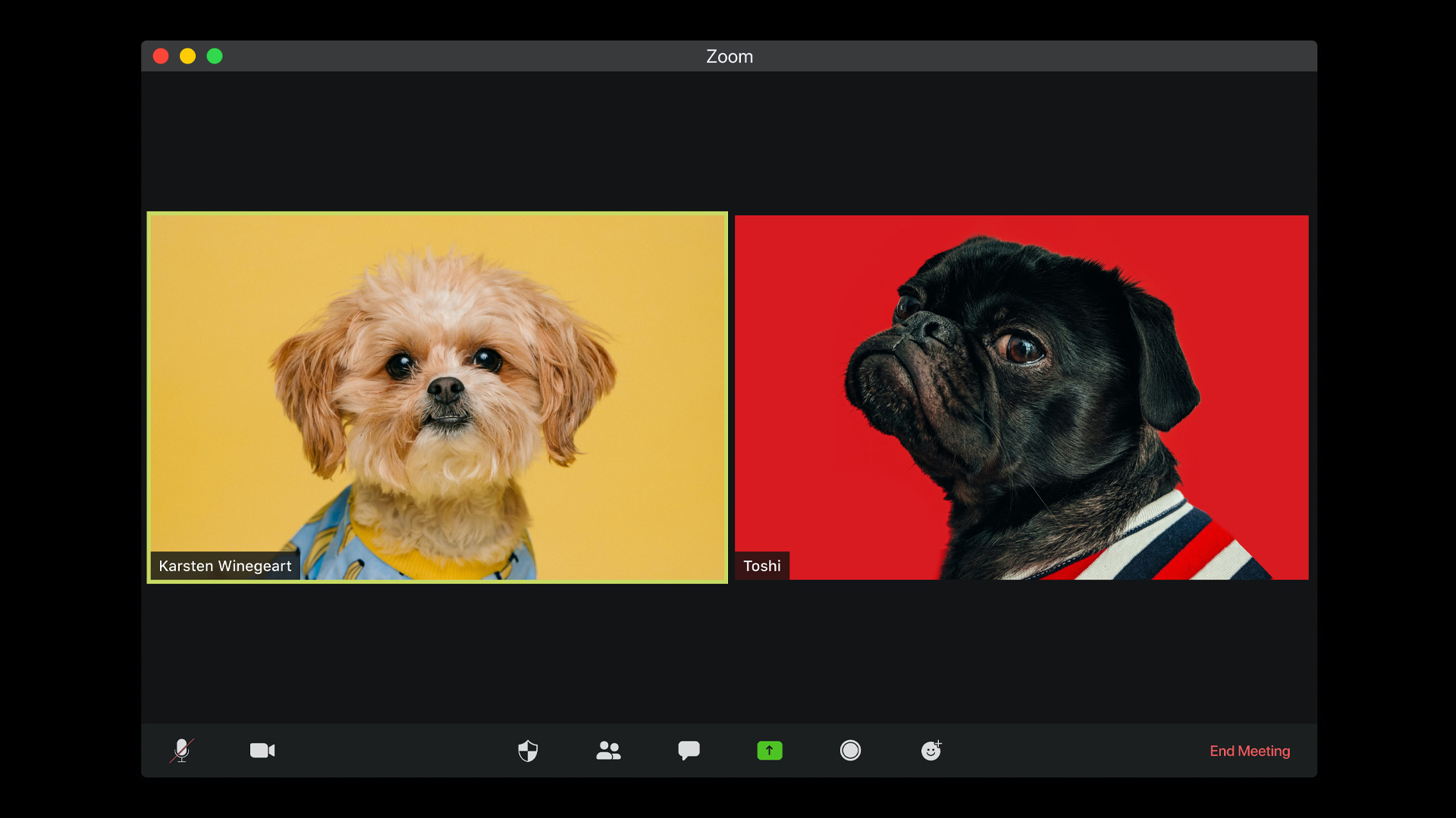 online zoom conference with images of dogs